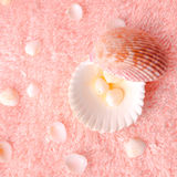 Spa tender concept with light seashells on delicate terry textur Stock Photos