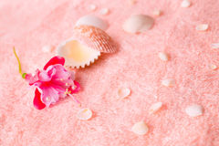 Spa tender concept with pink flower fuchsia, seashells on delica Stock Images