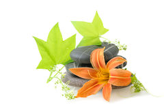Spa  theme with lily Stock Photography