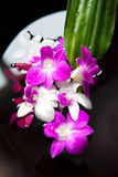 Spa therapy with orchids and  stones Royalty Free Stock Image