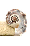 Spa towel and seashell Royalty Free Stock Photography