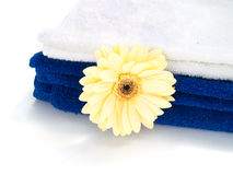 Spa towels. With herbera flower isolated over white Royalty Free Stock Image