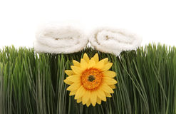 Spa towels and daisy Royalty Free Stock Image