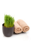 Spa towels and wheatgrass Stock Photo