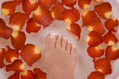 Spa Treatment. Having spa treatment with mineral water and rust colored rose petals Royalty Free Stock Photos