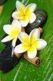 Spa treatment. White yellow plumeria and stone Stock Photo