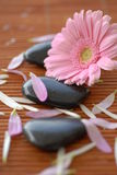Spa treatment. Flower and spa stones Royalty Free Stock Photos