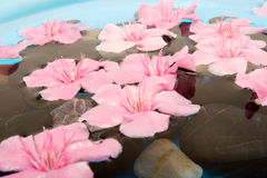 Spa treatment with flowers and water Royalty Free Stock Photos