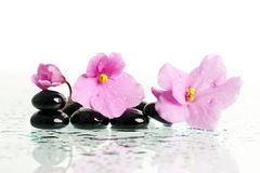 Spa treatment massage stones Royalty Free Stock Image