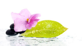 Spa treatment massage stones and pink flower Royalty Free Stock Photos