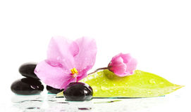 Spa treatment massage stones and pink flower Stock Image