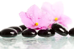 Spa treatment massage stones and pink flower Stock Images