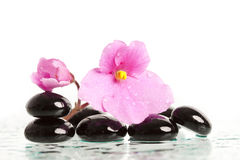 Spa treatment massage stones and pink flower Royalty Free Stock Photography
