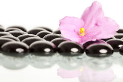 Spa treatment massage stones and pink flower Stock Photos