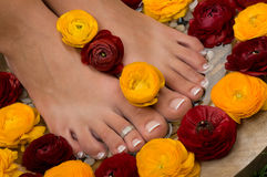 Spa treatment and pedicure Stock Photography