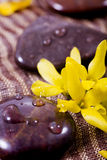 Spa treatment - rocks and flower. Rocks and flower in brown Stock Photography