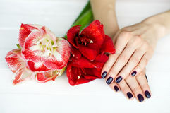 Spa treatment for woman hands Stock Photography