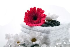 Spa utensils. Beautiful red flower and white flowers with black and clear stones on clean white towels isolated on white background Royalty Free Stock Image
