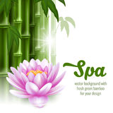 SPA. Vector card on spa theme with bamboo, and lotus on white background stock illustration