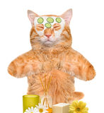 Spa wash cat . Royalty Free Stock Images