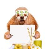 Spa wash dog Royalty Free Stock Image