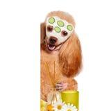Spa wash dog Stock Photos