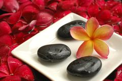 Spa and wellness. Tropical plumeria and stones, as seen in a spa Stock Image