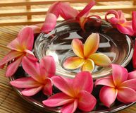 Spa and wellness. Plumeria in scented water, as seen in a spa Stock Photos