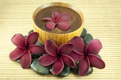 Spa and Wellness. Tropical Frangipani  arrange in a spa and wellness concept Royalty Free Stock Photos