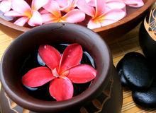 Spa and wellness. Frangipani flower with zen stone Royalty Free Stock Images