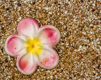 Spa and wellness. Plumeria ceramic flower  on sand in spa Royalty Free Stock Photos