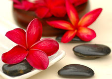 Spa and wellness. Red frangipanis and therapy stones Royalty Free Stock Image