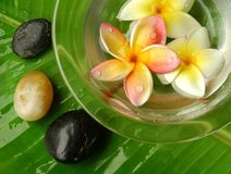 Spa and wellness. Tropical plumeria in scented water and stones on banana leaf Stock Photos