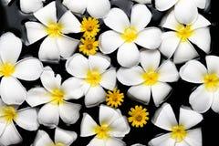 SPA, wellness & aromatherapy έννοια, όμορφα λουλούδια Στοκ Φωτογραφία