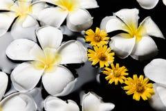 SPA, wellness & aromatherapy έννοια, όμορφα λουλούδια Στοκ φωτογραφία με δικαίωμα ελεύθερης χρήσης