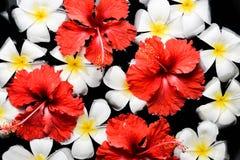 SPA, wellness & aromatherapy έννοια, όμορφα λουλούδια Στοκ εικόνα με δικαίωμα ελεύθερης χρήσης