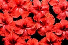 SPA, wellness & aromatherapy έννοια, όμορφα λουλούδια Στοκ εικόνες με δικαίωμα ελεύθερης χρήσης
