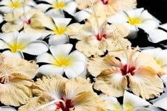 SPA, wellness & aromatherapy έννοια, όμορφα λουλούδια Στοκ Εικόνα
