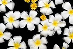 SPA, wellness & aromatherapy έννοια, όμορφα λουλούδια Στοκ φωτογραφίες με δικαίωμα ελεύθερης χρήσης