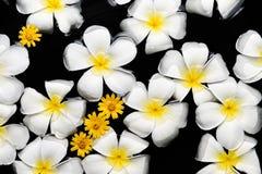SPA, wellness & aromatherapy έννοια, όμορφα λουλούδια Στοκ Εικόνες