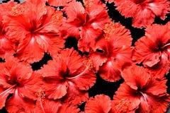 SPA, wellness & aromatherapy έννοια, όμορφα λουλούδια Στοκ Φωτογραφίες