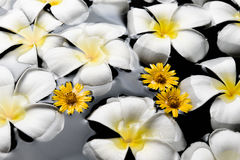SPA, wellness & aromatherapy έννοια Στοκ φωτογραφία με δικαίωμα ελεύθερης χρήσης