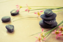 Spa wellness and beauty. A shot of black stones and pink flower to depict wellness and beauty Royalty Free Stock Image