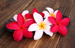 Spa and Wellness Concept. With Frangipani Flowers Stock Images