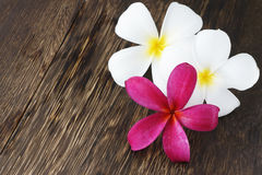 Spa and Wellness Concept. Frangipani Flowers on wood for spa and wellness concept Royalty Free Stock Images