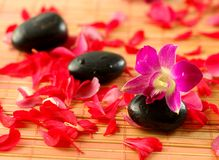 Spa and wellness concepts. Volcanic therapy stones with red and pink flower petals on bamboo mat Royalty Free Stock Photography