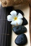 Spa And Wellness Image. White Frangipani with zen stone stock photos
