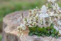 Spa and wellness setting with sea salt, oil essence, flowers and Royalty Free Stock Image