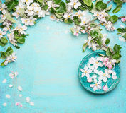 Spa or wellness turquoise background with  blossom and water bowl with white flowers, top view. Spring blossom background Stock Photos