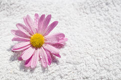 Spa Wet Flower And Towel Stock Photos